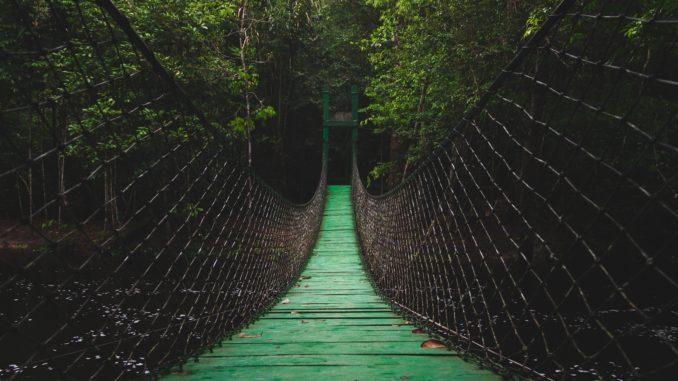 Peru's amazon - explore the jungle